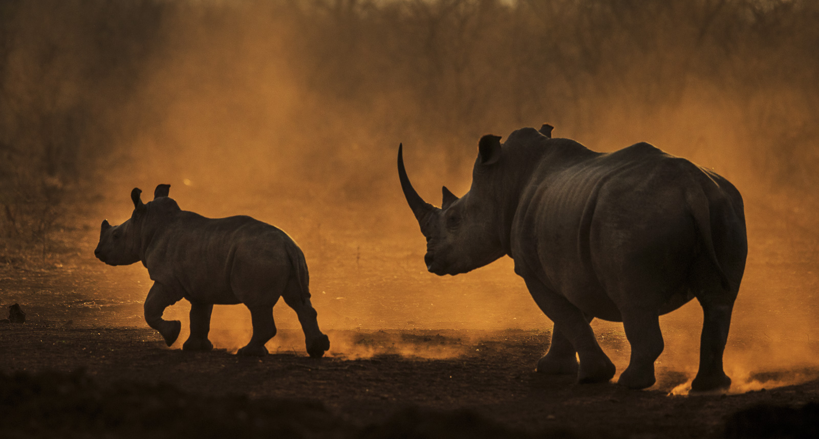 Andrew Aveley Photography, Workshops and Safaris