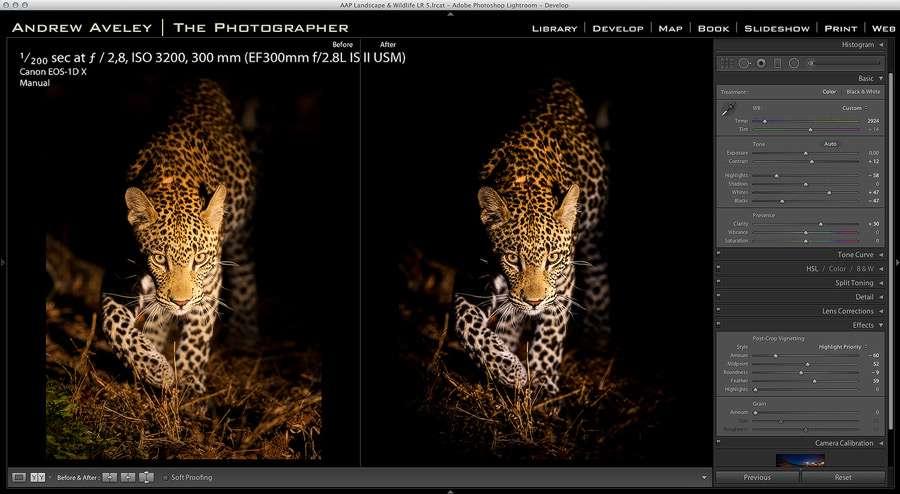 Leopardatnight