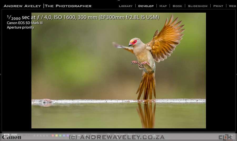A Red Face Mousebird