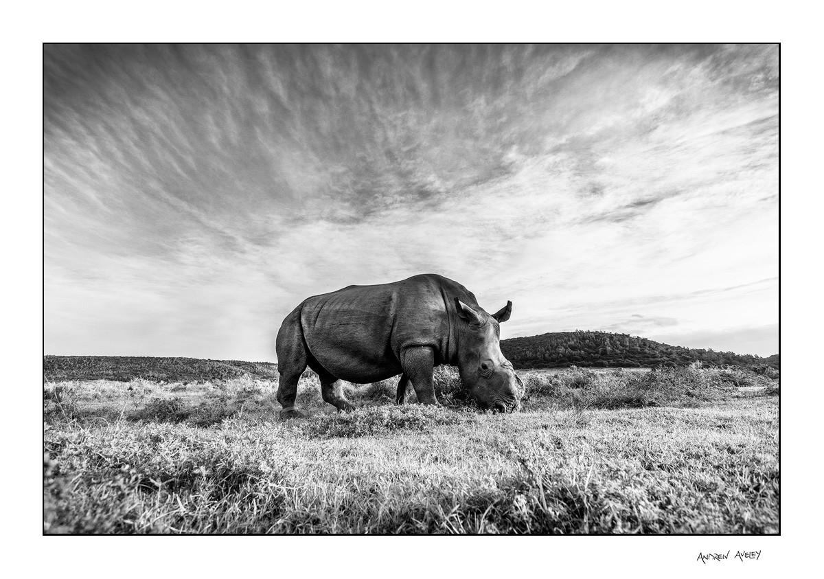 Thandi the rhino in a centre composition