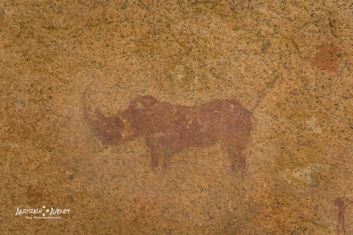 The spitzkoppe rhino and the ancients