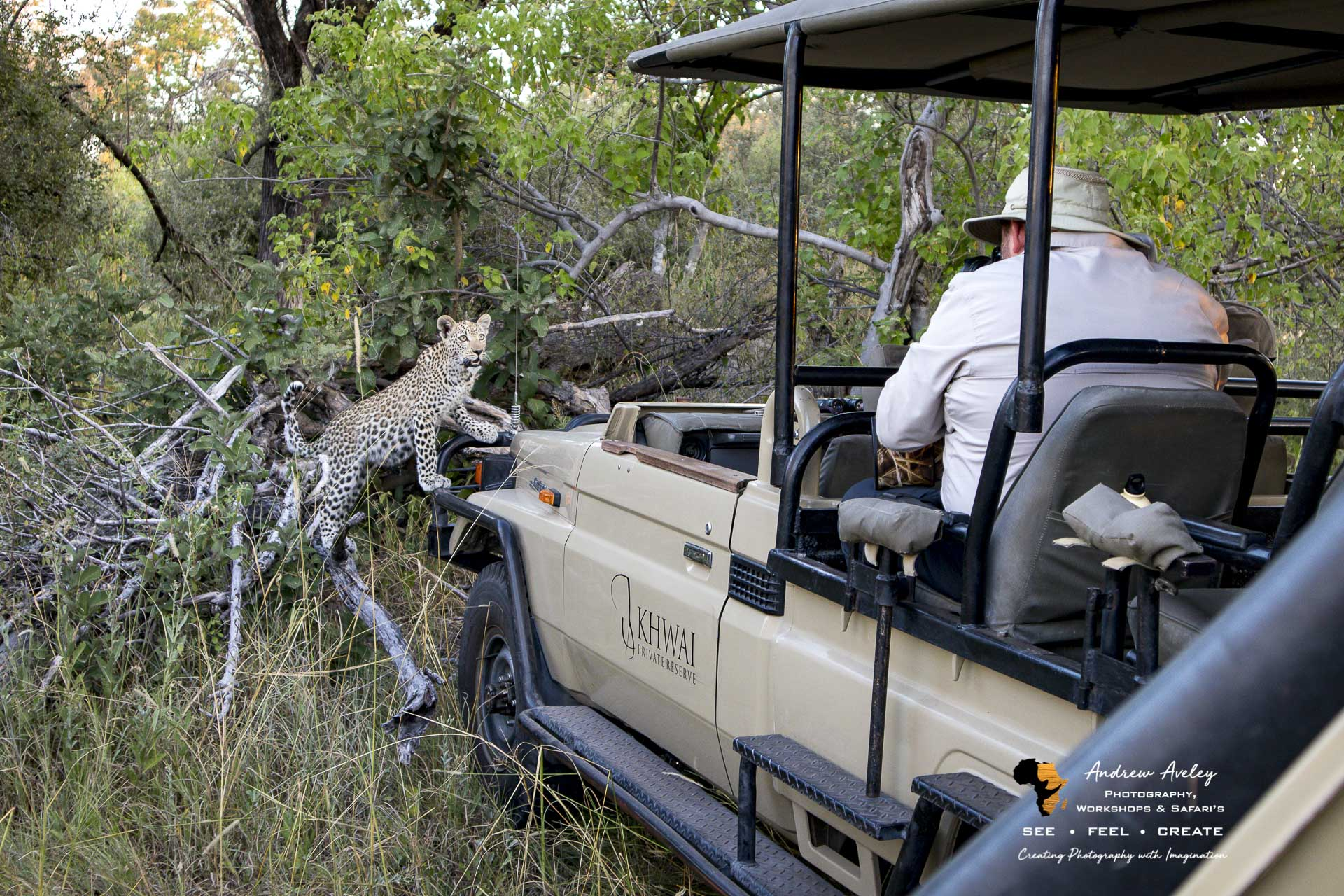 On safari with a Canon M50