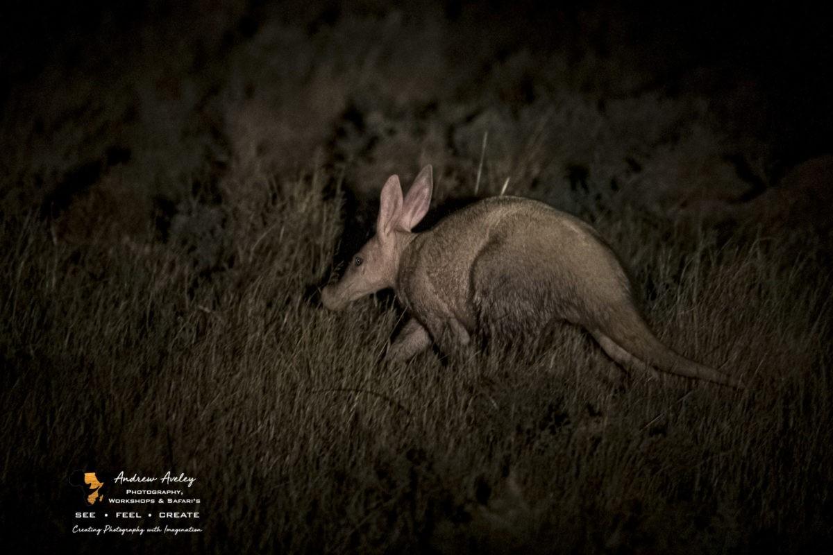 Diversity in Light – The Karoo