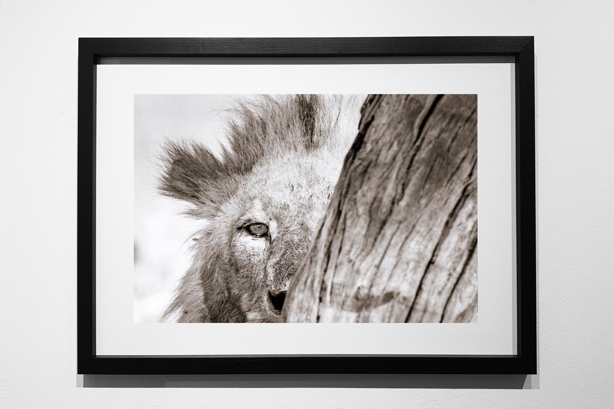 Buy online - Framed Printgs by Andrew Aveley, Wall Art, Fine Art, Interior Decor, Canvas Frames