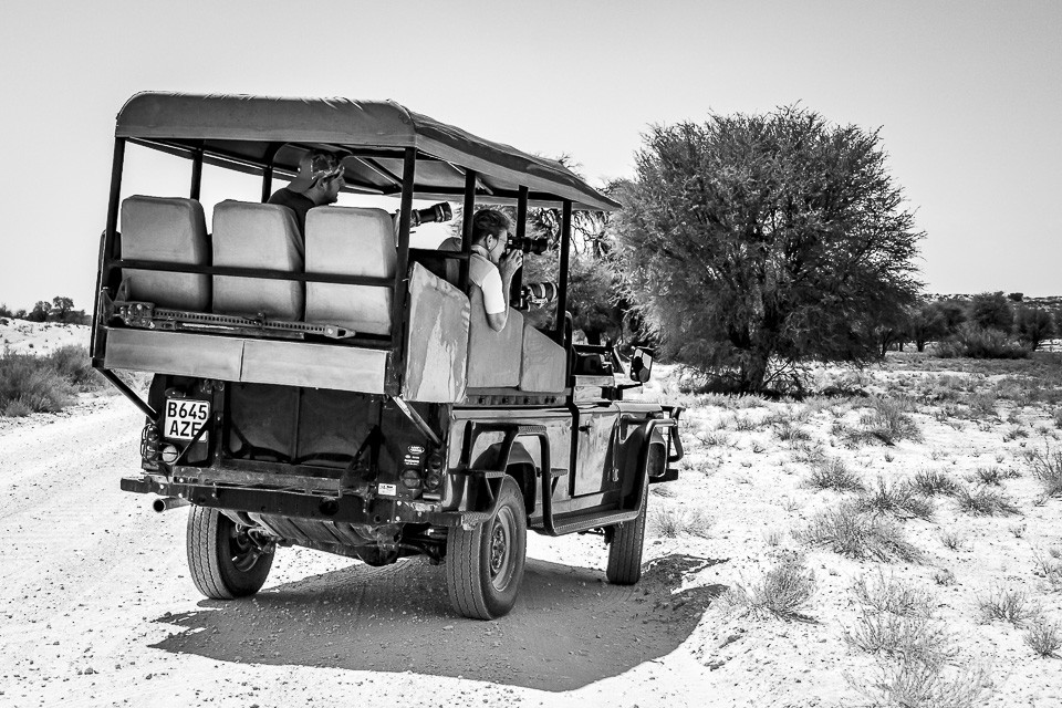 Kgalagadi Safari Guest Images