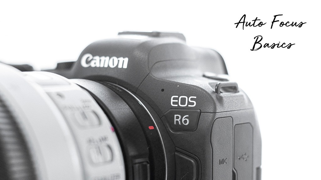 My Expert Review Canon R6 – Auto Focus