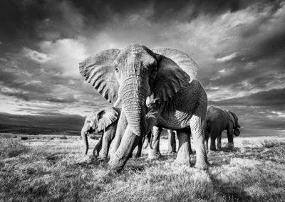 Monochrome Wildlife Portfolio of Images by Andrew Aveley