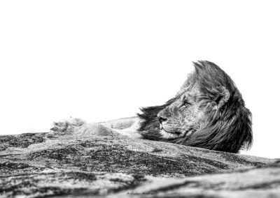 High Key Wildlife Portfolio of Images by Andrew Aveley
