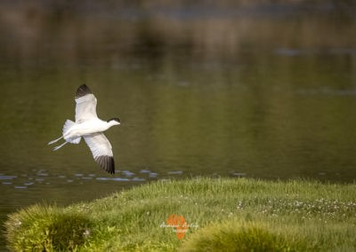 Canon EF Lens and R6 for great bird photography